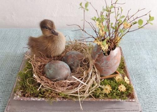 Kobber æg og udstoppet ælling 012