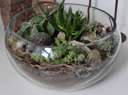 Blomster terrarium nær 007
